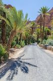 Asphalt road leading through beautiful palm lined gorge, Morocco, North Africa Royalty Free Stock Images