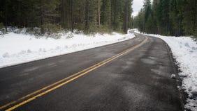 Asphalt Road Leads Through Forest för två gränd vintertid royaltyfri foto