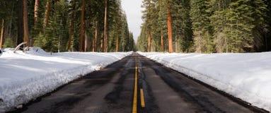 Asphalt Road Leads Through Forest för två gränd vintertid arkivbild