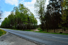 An asphalt road leads through the woods shot from the side Royalty Free Stock Photography