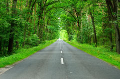 An asphalt road leads through the woods shot from the side Royalty Free Stock Photo