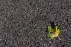 Asphalt Road Leaf Laying Alone Enig Autumn Texture stock foto's