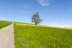 Asphalt road between  meadows  in Switzerland Stock Photography