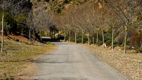 An asphalt road in the middle of the countryside with two tree lines without leaves at both sides of the road without vehicles an. A mountain at the end in a royalty free stock images