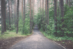 Asphalt road in the morning in forest Stock Photos