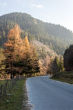 Asphalt road in mountain. Narrow asphalt road with several pine trees in autumn Stock Photo