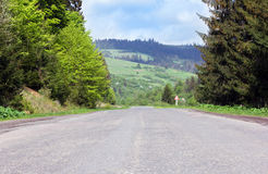 Asphalt road through mountains with fir-trees Stock Images