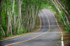 Asphalt road with natural tree tunnel in Kaeng Krachan National Park of Thailand Royalty Free Stock Photo