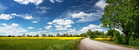 Asphalt road near a field. With beautiful rapeseed flowers Stock Photo