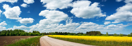 Asphalt road near a field. With beautiful rapeseed flowers Stock Images