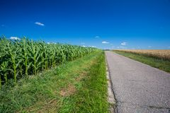 Asphalt road near fields stock image