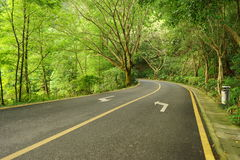 Asphalt road in park Stock Photography
