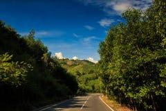 Asphalt Road parmi des plantes tropicales contre le ciel de collines Images stock
