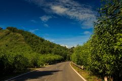Asphalt Road parmi des plantes tropicales contre le ciel de collines Photographie stock libre de droits