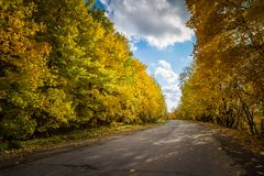 Asphalt road passing through the forest Stock Photography