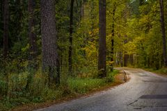 Asphalt road passing through the forest Royalty Free Stock Images