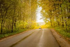 Asphalt road passing through the forest Royalty Free Stock Photos
