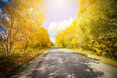 Asphalt road passing through the forest Royalty Free Stock Photo