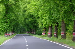 Asphalt road. Royalty Free Stock Photos