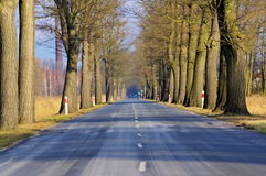 Asphalt road. Stock Image
