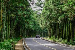 Asphalt road with pine tree forest stock photo