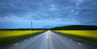 Asphalt road in rape field Royalty Free Stock Images