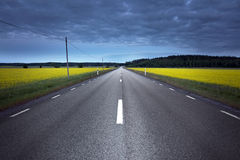 Asphalt road in rape field Stock Photos