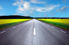 Asphalt road in rape field Stock Image