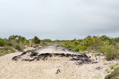 Asphalt Road Remains in Assateague-Insel, Maryland stockfoto