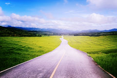 Asphalt road with rice field in countryside along to blue sky. Royalty Free Stock Photography