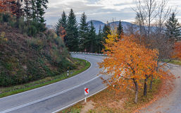Asphalt road running along the slope overgrown with coniferous forest in mountain autumn Stock Image