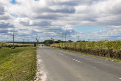 Asphalt Road Running Through Sugar vide rural Cane Fields photos stock