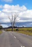 Asphalt Road Running Through Sugar vide rural Cane Fields photographie stock