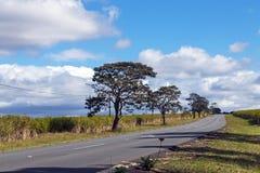 Asphalt Road Running Through Sugar vide rural Cane Fields images libres de droits