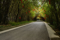 Asphalt road in shaded bamboo on sunny spring day Stock Images