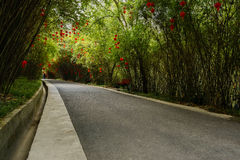 Asphalt road in shady bamboo on sunny spring day Stock Photos