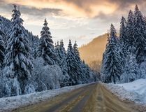 Asphalt road through spruce forest at sunset. Gorgeous nature scenery in winter mountains Stock Photography