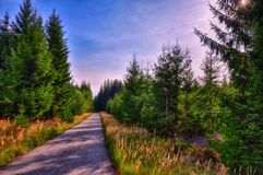 Asphalt road in spruce tree forest at summer day, sunlight, sun, Stock Image