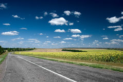 Asphalt road stretching out into the field. Asphalt road stretching out into the sunflower fields Stock Photos