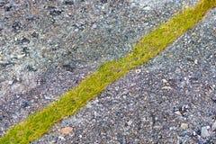 Asphalt road with stripe on grass. Stone asphalt road with stripe of green grass. Norway, Europe Royalty Free Stock Image