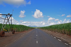 Asphalt Road in between sugarcane plantation field stock photography