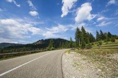 Asphalt road in summer forest Stock Images