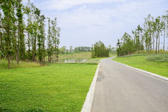 Asphalt road in summer green on sunny day Stock Photos