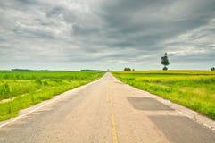 Asphalt Road Through Sunn Hemp Field, Thailand Royalty Free Stock Images