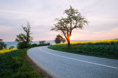 Asphalt road at sunrise Royalty Free Stock Photo