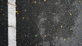 Asphalt road texture with orange falling leaves Royalty Free Stock Photography