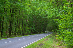 Asphalt Road Through The Forest. Royalty Free Stock Photos