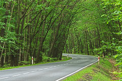 Free Asphalt Road Through The Forest. Stock Photos - 93892123