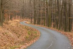 Asphalt Road Through Winter Forest Without Snow, Full Of Leaves On The Ground And Bare Trees Stock Images