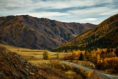 Asphalt road to the mountains of Altai passing through the autumn landscape stock images